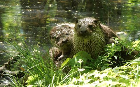 Weet je nog van die dekselse otter in de diepenring van Groningen? Hilco Jansma maakte een documentaire over het dier, die zaterdagavond te zien was