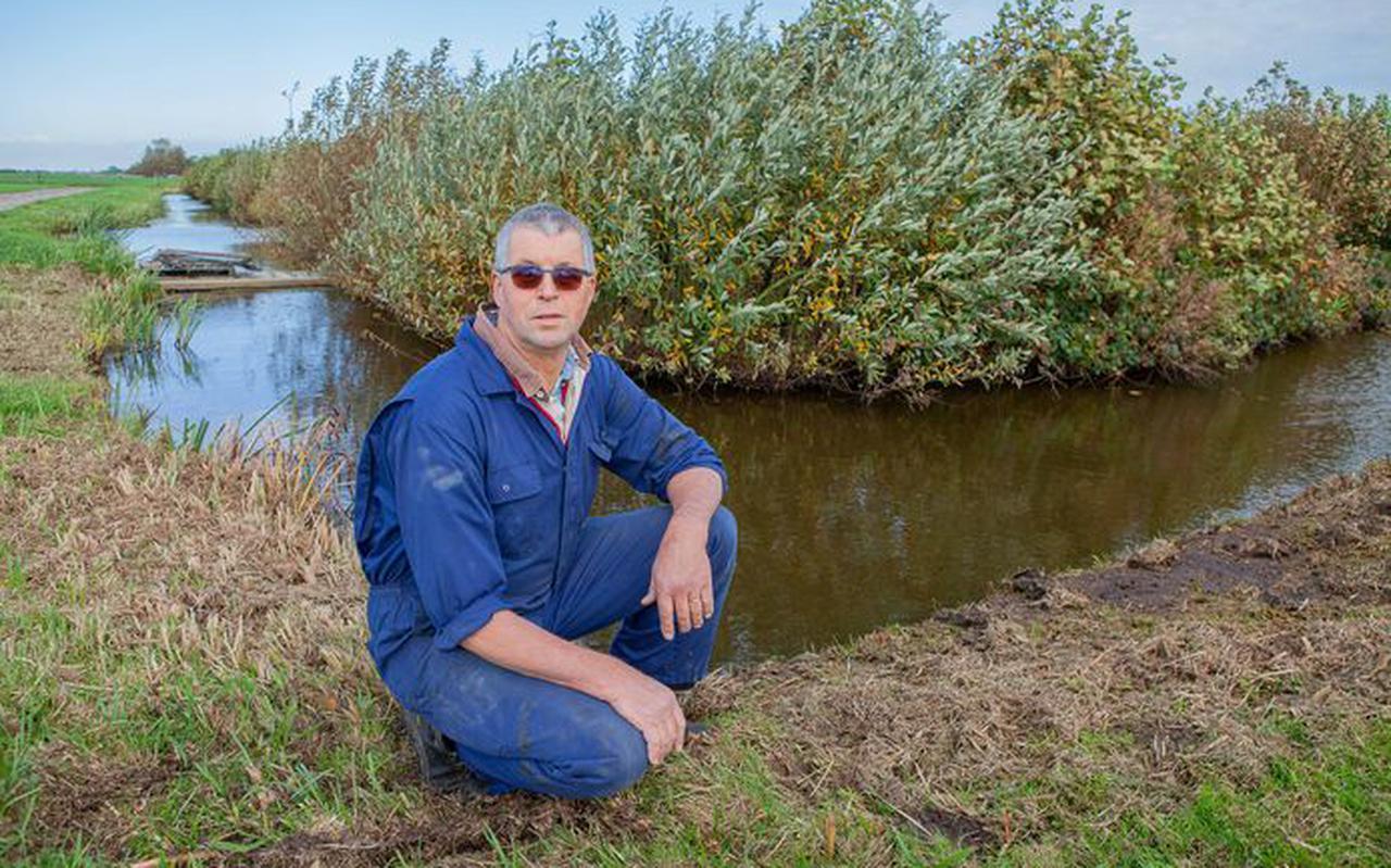 Agrariër Wim de Wit op de plek in zijn land waar hij een aantal dode zwanen aantrof.