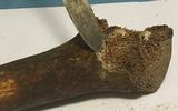 Helaas, wetenschappers van Rijksuniversiteit Groningen hebben niet de botten van de broer van Jezus in handen. 'Deze man leefde 160 tot 240 jaar later'