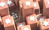 Nieuw leven op plek van diepe duisternis. Vogel broedt op oorlogsmonument Westerbork