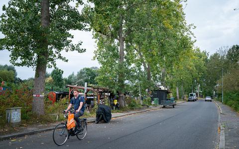 Deze rij populieren aan de Energieweg moet gekapt worden: door takbreuk zijn ze een gevaar voor de mensen die er in woonboten wonen.