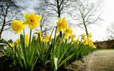 Eindelijk lente: de zon gaat volop schijnen dit weekend