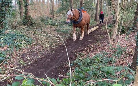 Poasbargbossie in Ruinen is met hulp van paarden uitgedund