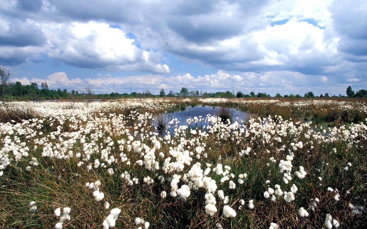 Natuurpark Moor-Veenland in Zuid-Oost Drenthe.