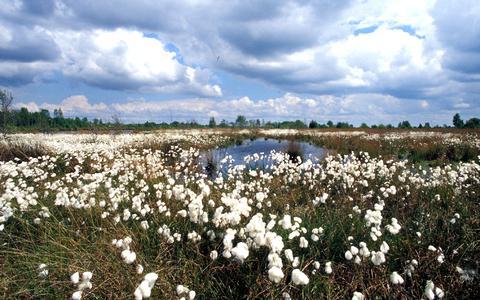 Wetenschapper van de RUG: 'Er is geen land ter wereld waar het landschap zozeer op de schop is gegaan als Nederland' (en Drenthe spant misschien wel de kroon)