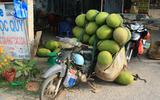 Jackfruit: wat is het en wat kan je met deze vleesvervanger uit een boom?