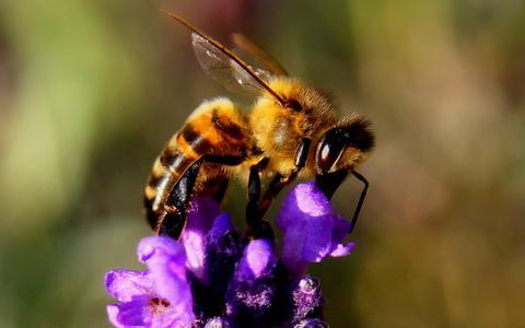 'Bijles' op Drentse basisscholen richt zich op betere leefomgeving voor bijen en bewustwording bij kinderen