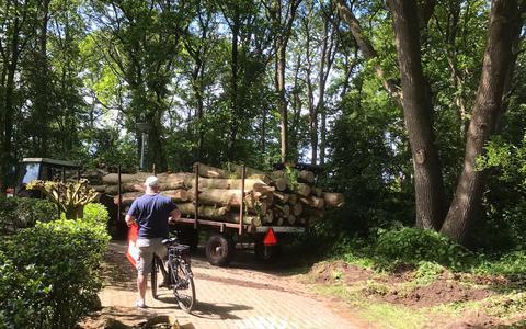 Partij voor de Dieren wil opheldering over bomenkap op vakantiepark in Westerbork