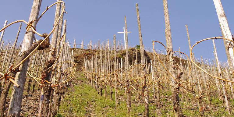 Een wijngaard aan de Moezel