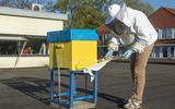 Tienduizenden bijen op dak van supermarkten in Sleen en Nieuw-Amsterdam: 'honing uit je eigen achtertuin'