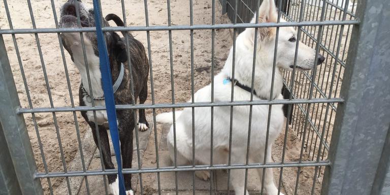 De asielhonden wachten met smart op een nieuwe baas