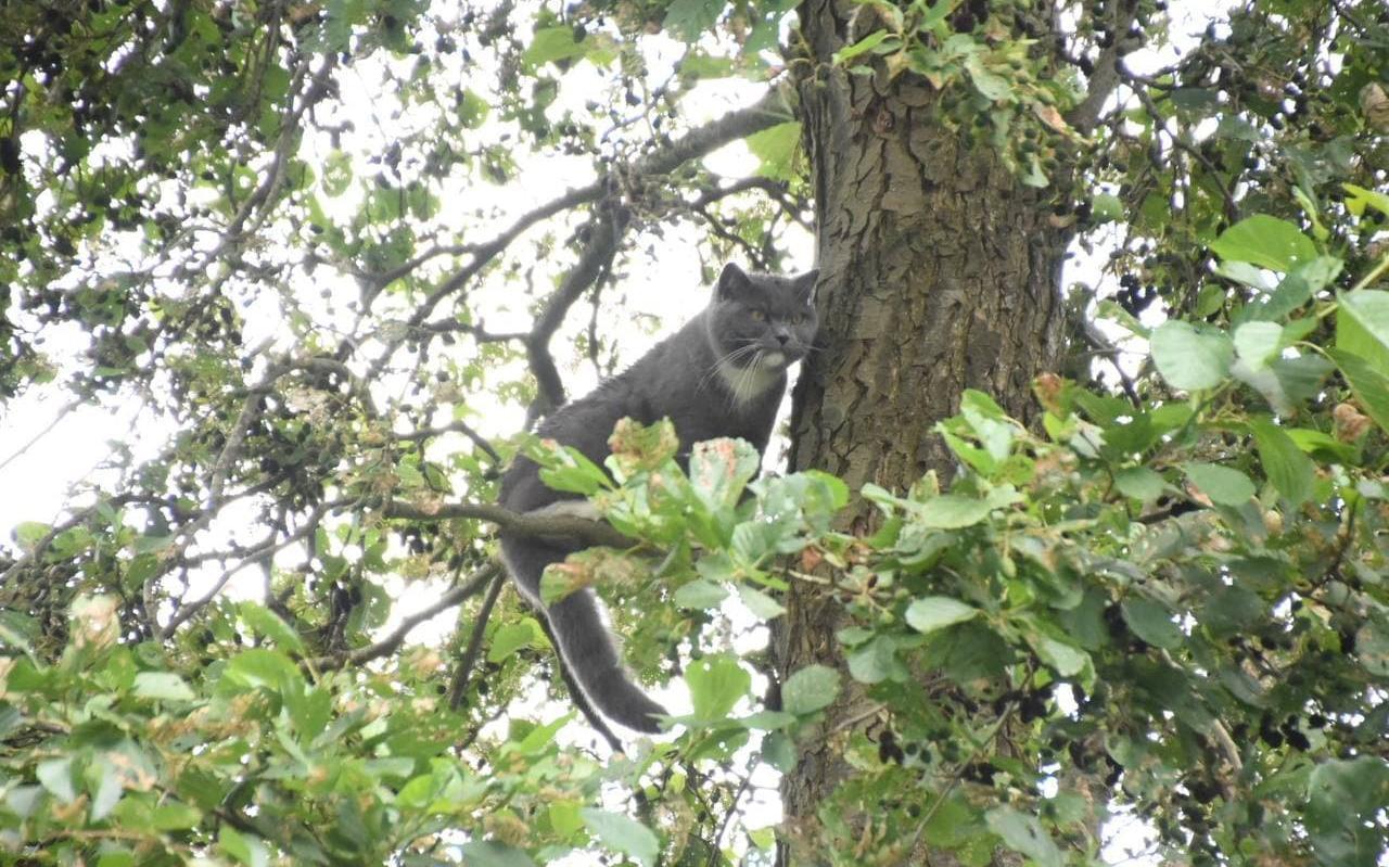 Odie de poes, toen ze nog in de boom zat.