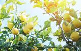 De citroen: het zuur dat ons smaak geeft (en het doet wonderen voor je lichaam)