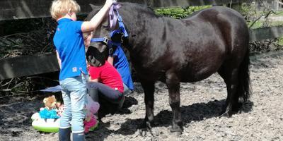 Spelenderwijs met pony's aan de slag.