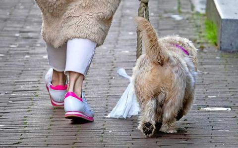 Stel, je hebt corona, zit in quarantaine en niemand kan je helpen: wie doet boodschappen en laat de hond uit?