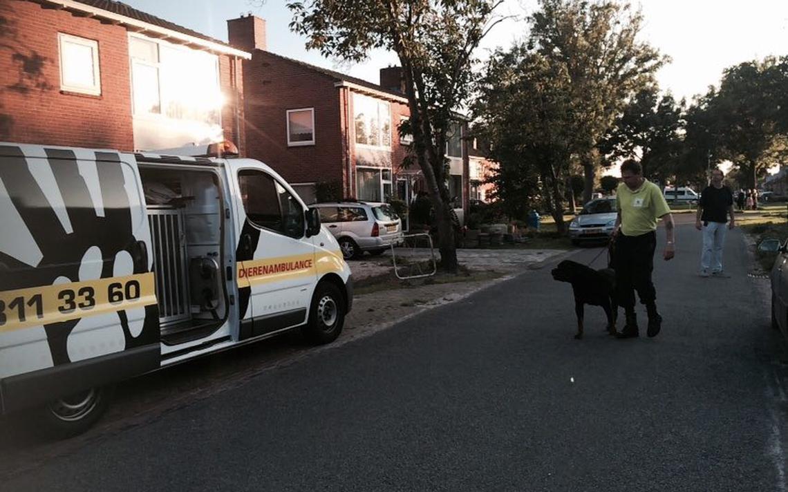 Rottweilers die jongetje beten afgemaakt   drenthe   dvhn.nl