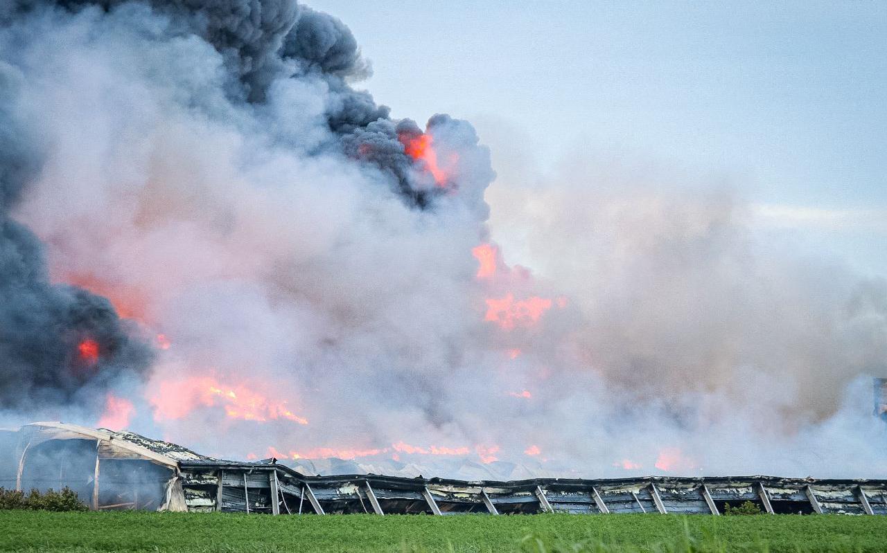 Het vuur legde de kippenschuren in Kiel-Windeweer volledig in de as.