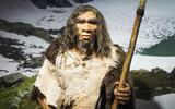 Vuistbijlen van Drentse neanderthalers reizen naar Denemarken voor grote expositie