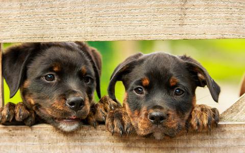 Geen enkele gemeente in Drenthe heft nog hondenbelasting en daarmee is onze provincie de enige.