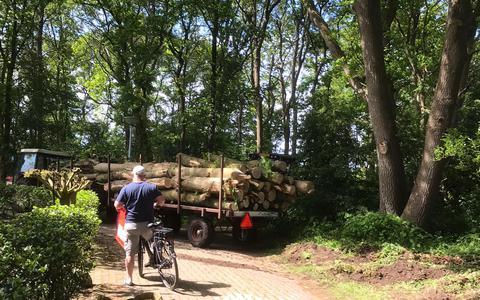 Bomenkap op vakantiepark Het Timmerholt in Westerbork. Provincie: oké, maar gemeente zegt 'nee'. Hoe kan dat?
