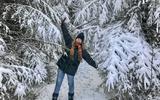 Wandelen door een kerstkaart: De jeneverbessen in het Sleenerzand bij Schoonoord gaan gebukt onder de sneeuw