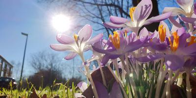 De lentezon had vandaag vrij spel. Foto: Persbureau Meter
