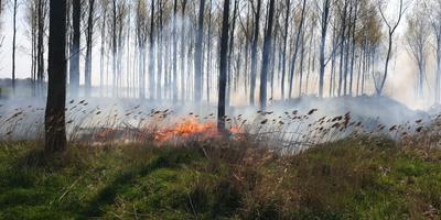 In het gras tussen de bomen nabij Engelbert woedt flinke brand.