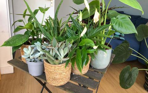 Beschadigde planten krijgen tweede leven dankzij de 'Kneusjesbox'