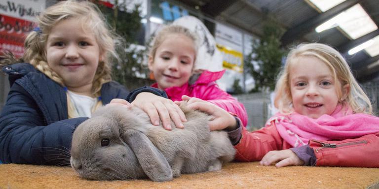 Kleindierenshow Midden-Drenthe. FOTO DVHN/FRANK JEURING