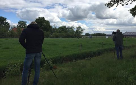 Zeldzame Roodkopklauwier houdt vogelspotters flink bezig aan de Hendrikus Zomerweg
