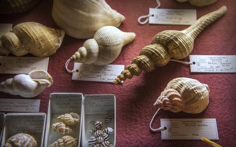Museumtest: Miramar Zeemuseum maakt de plastic soep inzichtelijk en roept op tot actie