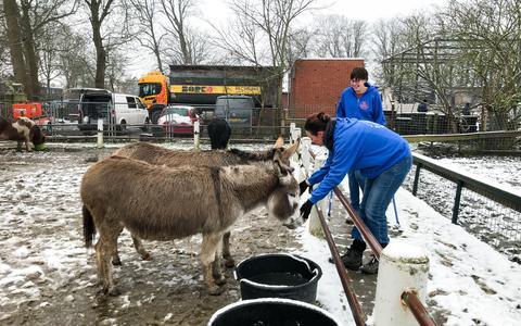 Buurt aan de schoonmaak na brand boerderij Groningen; kinderboerderij kreeg hartverwarmend veel steun