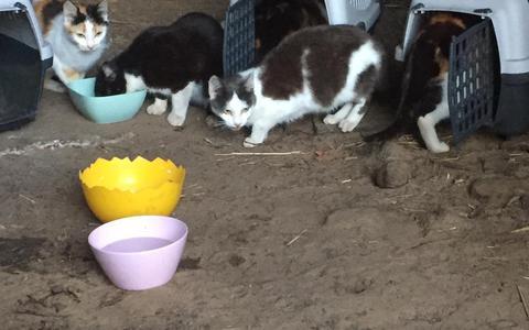 Wat gebeurt er met de katten in een leegstaande boerderij in Schoonebeek?