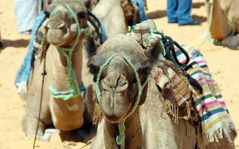 Tunesië, het land van zee, strand, woestijn en kamelen.
