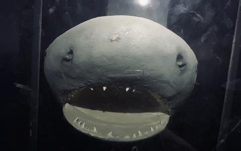 'Die haaienbek uit het voormalige dierenpark Emmen? Brrr, ik durf nog steeds niet goed langs aquaria te lopen'