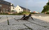 Wat is dit voor krab die over straat loopt in Groningen? 'Op weg naar de Waddenzee'