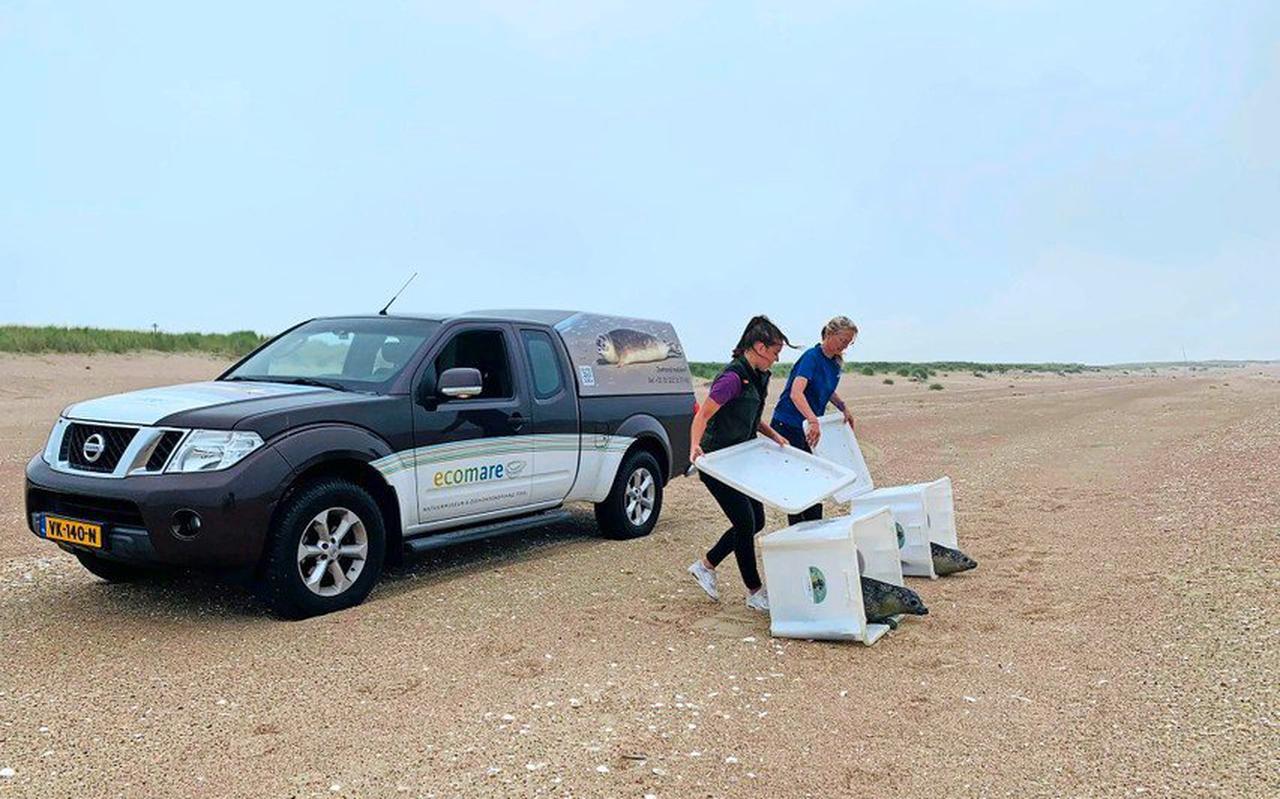 Medwerkers van Ecomare kunnen op de Prins Hendrik-zanddijk met de auto vlakbij het strand komen.