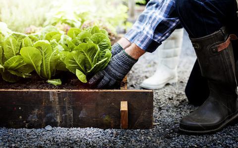 Lekker in de lente: deze seizoensgroenten zijn nu volop verkrijgbaar