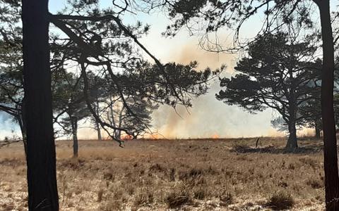 Getuigen natuurbrand Alteveer: 'Het vuur verspreidde zich razendsnel'