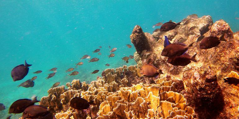 De zee bij Bonaire. FOTO SNORKELINGDIVES.COM
