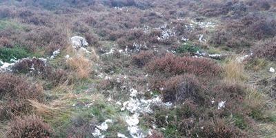 Een van de dode schapen nabij Echten.