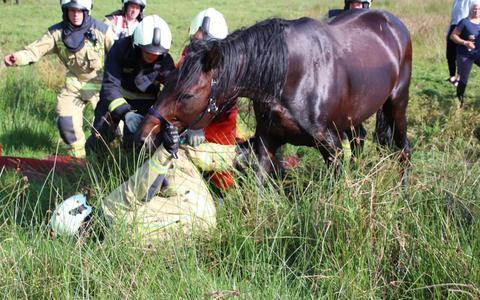 Brandweer in het nauw bij redden van paard
