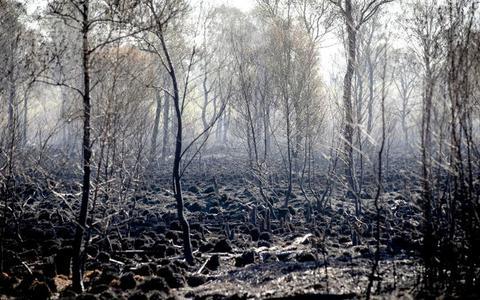 Waar komen die ongemeen felle natuurbranden toch vandaan?