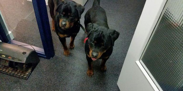 De in Roden aangetroffen honden. Foto Twitter/@PolitieTynaarlo