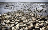 Zachte Waddendijk voor meer natuur: 'Daar waar het kan zouden we de Waddenzee wat meer ruimte willen geven'