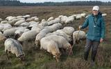 'Bij vertrokken herders schaapskudde Exloo was sprake van plichtsverzuim'