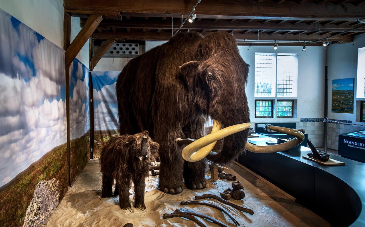 De mammoeten in het OERmuseum.