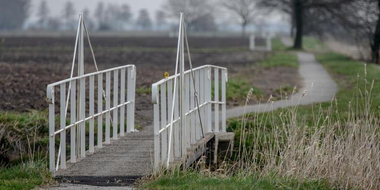 De Veenkoloniën hebben veel te bieden, ook natuurschoon, hier in Wildervanksterdallen. Foto archief Jan Zeeman