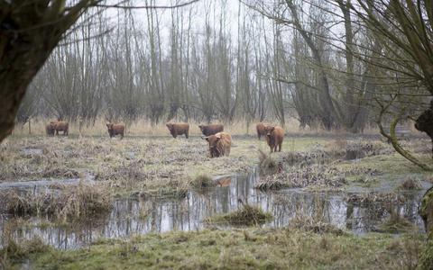 Nieuwe wildernis in Hoeksche Waard