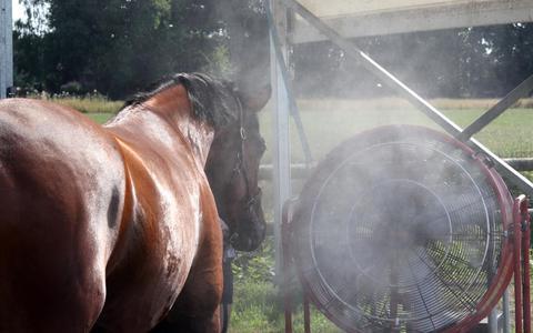 Paardensport in Exloo en Veeningen met coronamaatregelen én internationale deelnemers